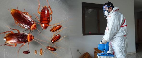 Fumigacion de cucarachas