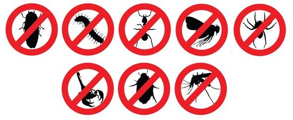 Fumigación de casas, cucarachas, insectos, roedores.